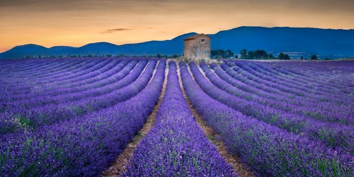 provence-2-2.jpg