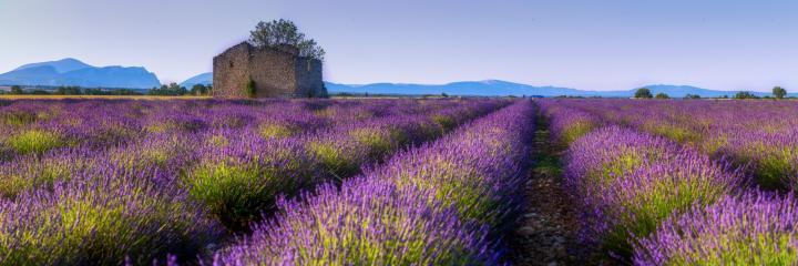 provence-3.jpg